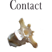 contact denise orzo
